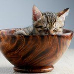 A stock photo of a kitten sound asleep in a wooden bowl.